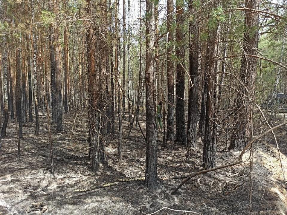 Пожар поразил 30 тысяч гектаров земли