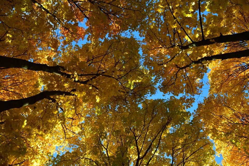 Осень наступает, но челябинцам обещают еще несколько теплых дней