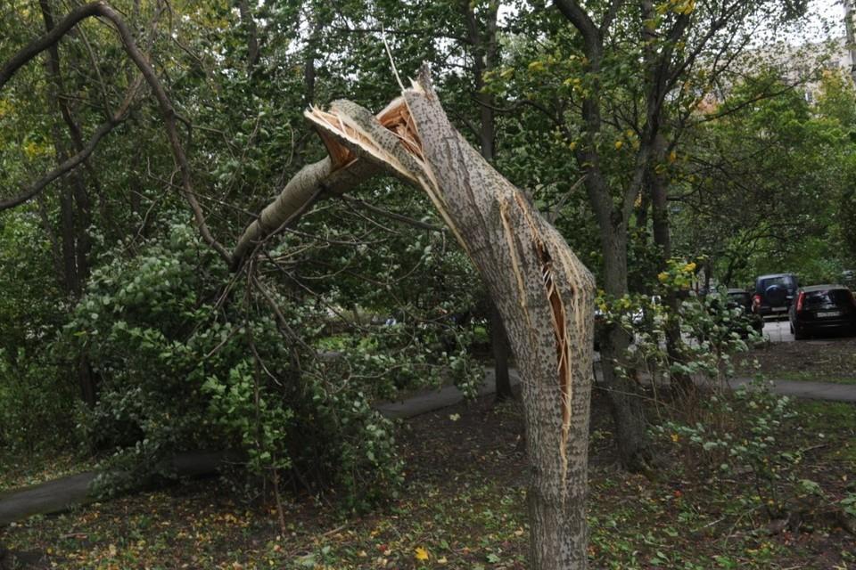 """Комитет по благоустройству подвел предварительные итоги """"дня поваленных деревьев"""" в Петербурге."""